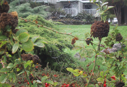 spider web cropped