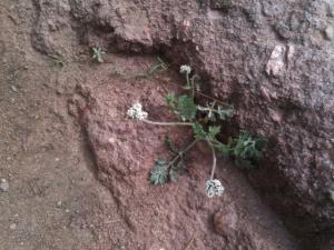 flower in rock