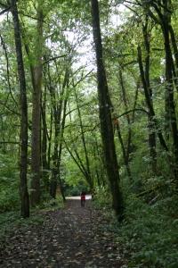 oregon tree path
