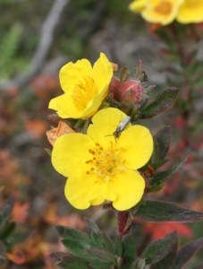 yellow-flower-(4) [1132313]