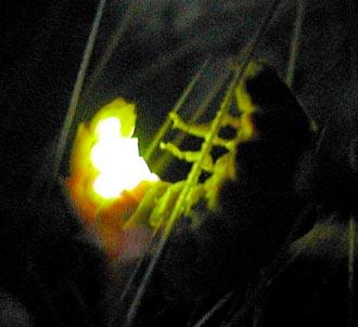 glowworm11