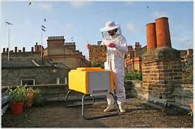urban-bees-2
