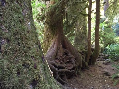 Tom's trees 2