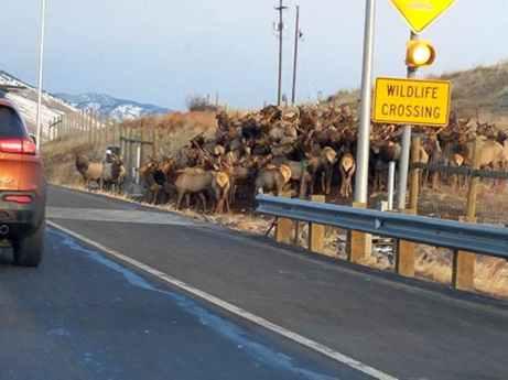 Wildlife_Crossing