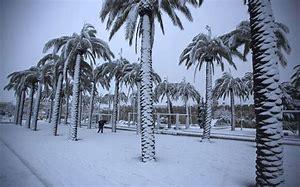 palm snow 1
