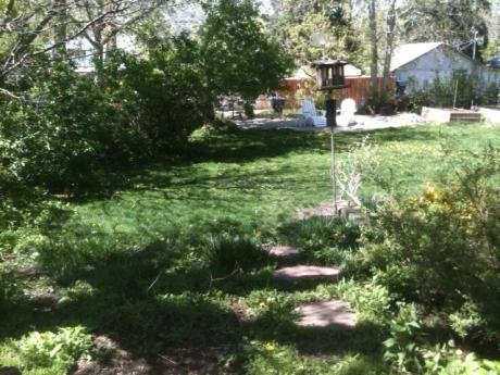 yard birds 1